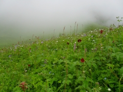 Trek to Valley of Flowers (ex-Joshimath with Auli stay)