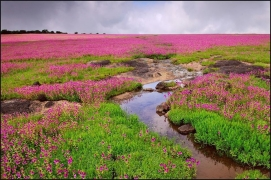 Kaas Plateau and Thoseghar Waterfall Visit