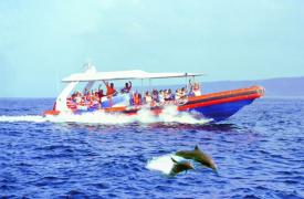 Dolphin Day Cruise in Bali