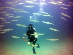 PADI Open Water Diver (OWD) Course in Bali