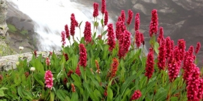 Backpacker's Trek to Valley of Flowers