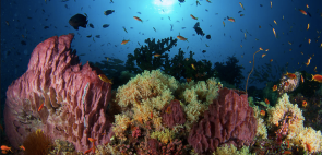 Discover Scuba Diving (DSD) (boat) in Neil Island