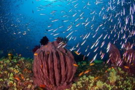 PADI Open Water course with standard hut stay