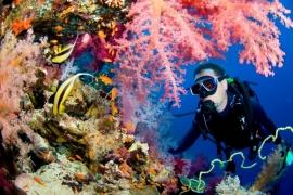 Andamans Fun Dives (4 dives)