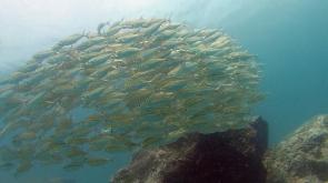 PADI Open Water Diver in Phuket, Thailand