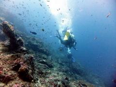 Fun Dive in Nusa Penida, Bali