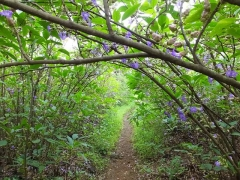 Vasota Jungle Camp and Trek