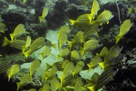 Discover Scuba Dive on boat (Single dive) at Neil Island