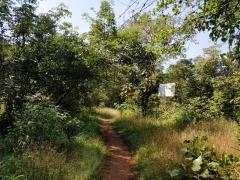 Lakeside camping near Sinhagad Fort