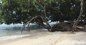Luxury trip to Andaman Islands (5n6d)