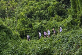 Short day trek in Bali