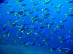PADI Open Water Diver in Tulamben, Bali