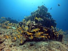 Fun Dive in Sanur, Bali