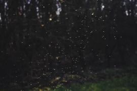 Purushwadi Fireflies Trek