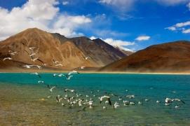 Srinagar-Leh-Turtuk-Manali motorbiking (12 days)