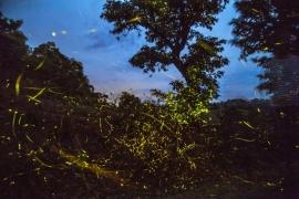 Fireflies Trek to Purushwadi
