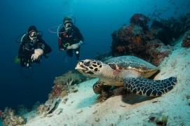 Discover Scuba Diving in Nusa Lembongan, Bali