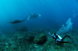 Fun Dive in Nusa Lembongan, Bali