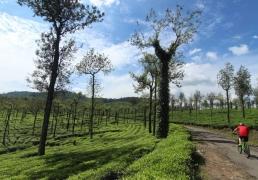 15-day Chennai to Cochin cycling trip