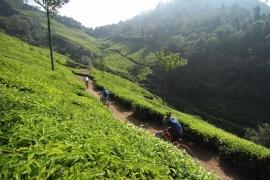Easy cycling tour in Idukki