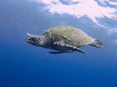 Fun Dive in Thailand (2 dives)