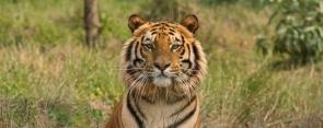Jungle Safari at Pench National Park (1N2D)