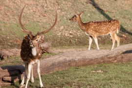 Jungle Safari at Pench National Park (2N3D)
