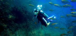 Fun Dive at Sail Rock