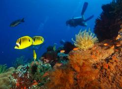 Fun Diving in Gili Air, Bali