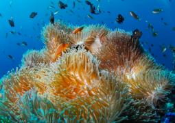 PADI Advanced Open Water Diver Course in Gili Air, Bali