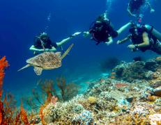 Fun Diving in Gili Trawangan, Bali