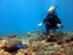 Fun Dive at Phi Phi and Shark Point in Phuket