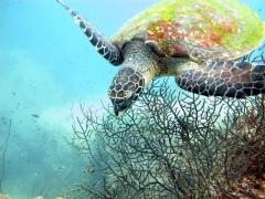 Koh Tao Snorkelling Trip