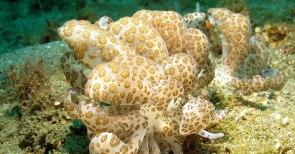 Discover Scuba Diving in Padangbai, Bali