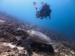 PADI Advanced Open Water Diver Course in Gili Trawangan