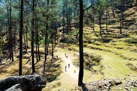 2-Day Camping Trip to Binsar Wildlife Sanctuary