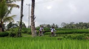 Half-Day Downhill Cycling Tour of Bali