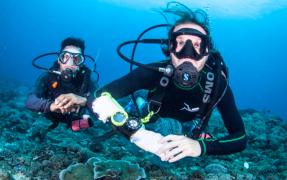 Fun Dive in the Gili Islands (1 Dive)