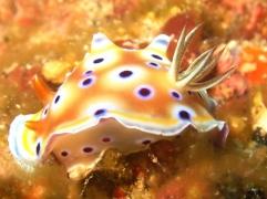 30 mins Try Dive in Neil Island