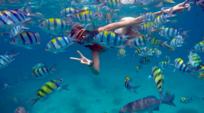 Phi Phi Islands Snorkeling and Island Hopping Tour