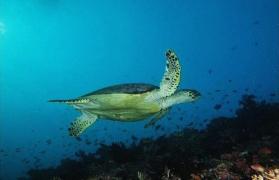 Scuba Trip to the Maldives