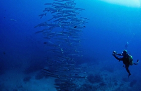 Discover Scuba Diving (DSD) (boat) in Andamans