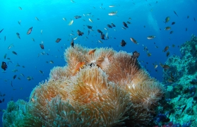 PADI Open Water Course (Andamans)
