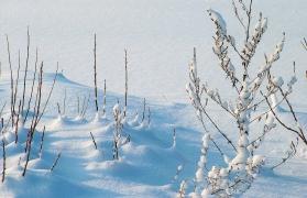 Snow trekking to Kedarkantha