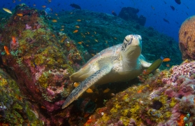 Scuba Diving Experience in Havelock (2 nights stay)