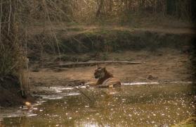 Kanha Safari Stay