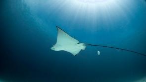 Discover Scuba Diving in Racha Yai