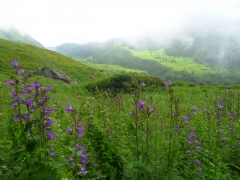 Trek to Valley of Flowers (Ex-Haridwar)
