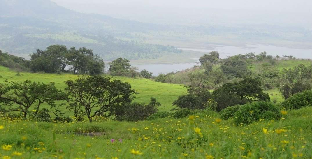Bhimashankar Monsoon Trek Maharashtra Trekking Adventure Activity Sports Fun Nature Mountains