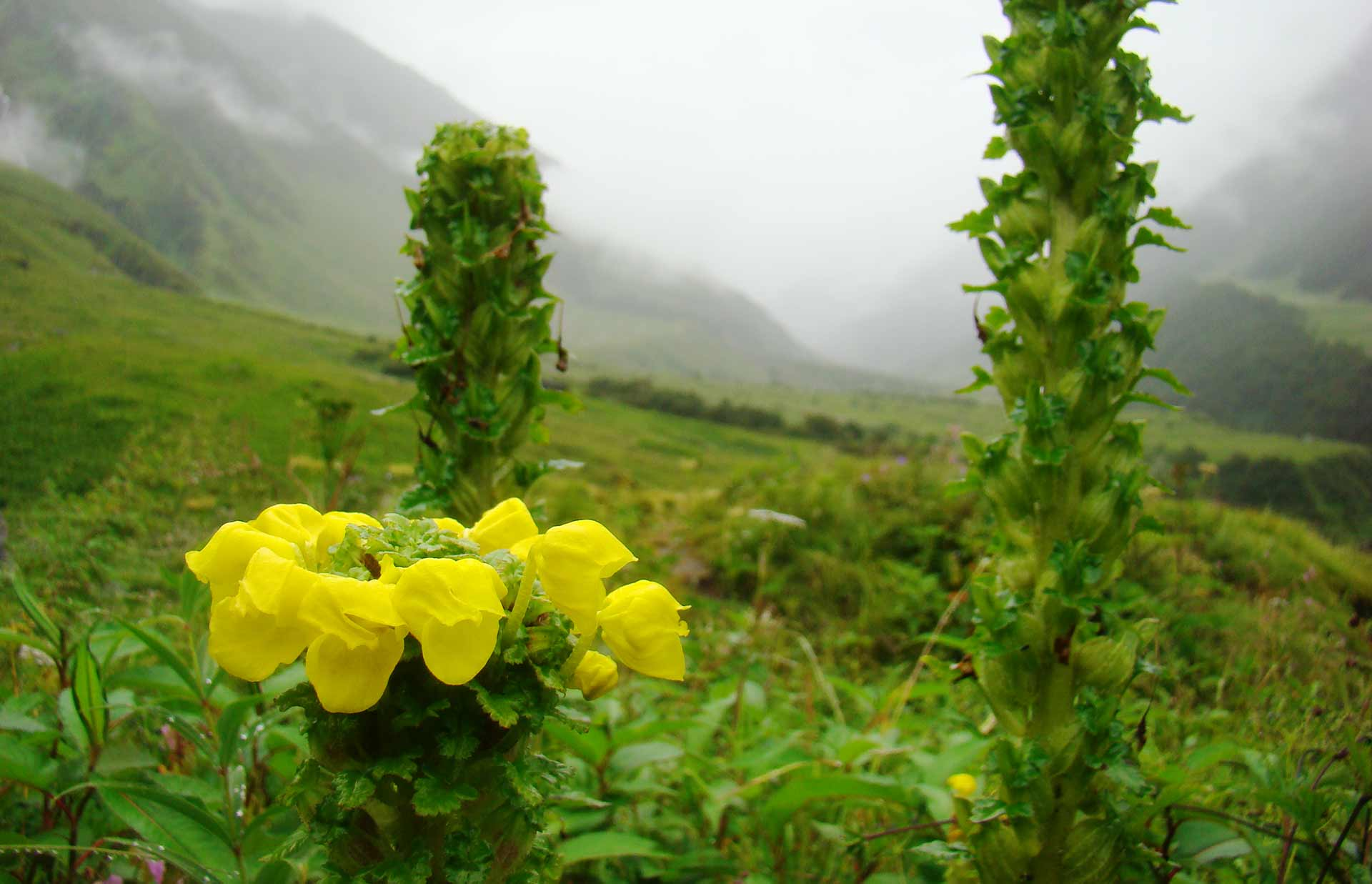 Valley of Flowers Trekking Adventure Nature Uttarakhand